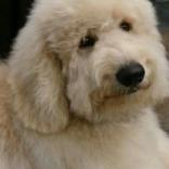 chralie-puppybeurtje.1.jpg